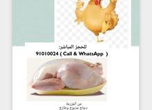 دجاج مذبوح طازج مع خدمة التوصيل