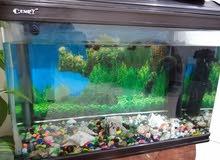 حوض أسماك للبيع مع كامل اغراضه