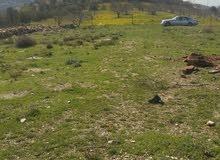أرض 11000م للبيع في جبال جرش  الحسينيات داخل التنظيم