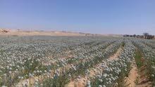 للبيع 65فدان  زراعية بمصر