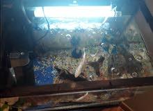 Fish with Fish Tank