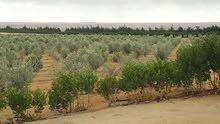 مزرعة 35فدان في مصر