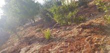 قطعة أرض للبيع في عجلون منطقة رأس منيف