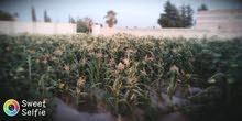 مزرعة مسورة غير مشجرة بريف دمشق للبيع
