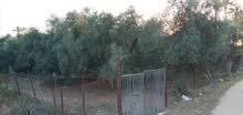 ارض مشجرة للبيع مشجرة
