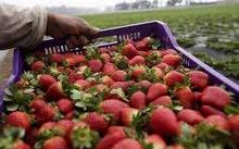 عمال صناعات غذائية