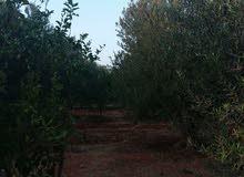 مزرعه للبيع 6000 متر بوهادي الضبعي