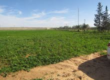 فرصة مزراعة في وادي الربيع الجنين متكاملها نمودجيها