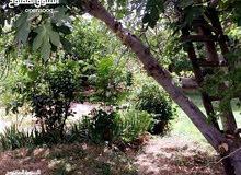 مزرعه 3550م مع بيت واسع ريفي -قرب مادبا 14 كليو
