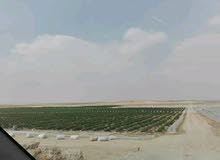 استثمر وامتلك مزرعه 20 فدان مسجله وبها جميع المرافق بالفيوم