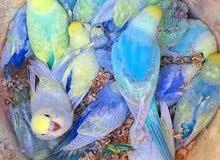 مجموعة طيور بسعر مغري جدا جميع الانواع بيع شراء تبديل
