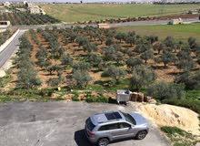 مزرعه في منطقة رحاب