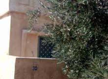 3 دنم و100م مزرعه مع بيت ريفي -قوشان ع شارع -في ذيبان جنوب مادبا المزرعه للبيع