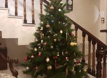 شجرة عيد الميلاد الاصلية