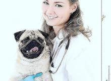 مطلوب طبيب او طبيبة بيطرية حيوانات أليفة