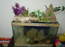 حوض سمك تفصيل زجاج سيكوريت