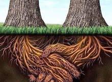 حدقجي لتقليم الاشجار وتزيين النخيل