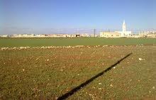 اراضي 31 دونم . المناره