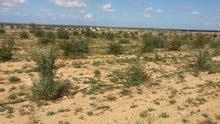 مزرعة زيتون ونخيل وتين و لوز وعنب بمنطقة الزطارنة (القزاحية)