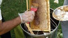 عسل السدر الفاخر