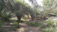 ارض سكنية زراعية طابو صرف عراقي