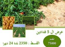 ارض في المنيا للزراعة للشباب بسعر مفاجاة من خيرات مصر