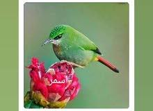 بسم الله الرحمن الرحيم ابحث عن وظيفه انا