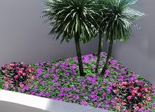 ازهار لميار لفن وتنسيق الحدائق المنزلية