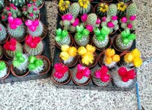 نباتات زينة داخلية