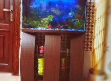 حوض سمك مفترس  مع اسماكه بسعر مغرري