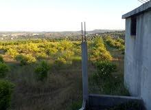 أرض زراعية للبيع ضمنها بناء يصلح لأن يكون معصرة