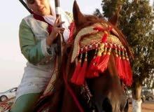 مدربة خيول وفارسة