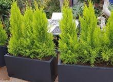 تهئئة حدائق ومساحات الخضراء