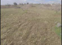 قطعة ارض زراعيه طابو اخضر من المالك بدون وسيط