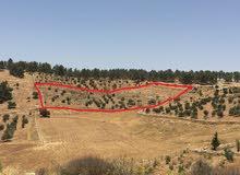 أرض مشجرة للبيع في جرش.. طريق عمان-اربد من مرتفعات ثغرة عصفور مطلة و مشرفة