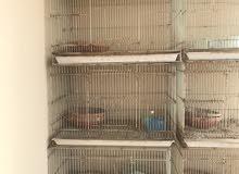 11 قفص طيور