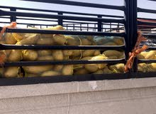 بطاطس البيع جمله 993كيس وزن الكيس 2كيلو