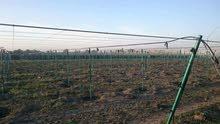 معرشات عنب استصلاح ارضي تشيك مزارع شبكات ري