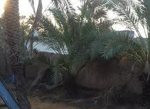 أرض للبيع مع بيت كامل في محافظة البصرة قضاء ابي الخصيب