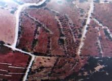 أرض للبيع في إشتفينا - عجلون