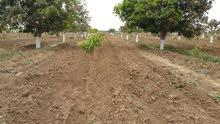 مزرعة في الكدن قرب باجل مساحتها 20 معاد مزروعة بها 400 شجرة منجا تيمور  وبها پئر