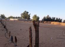 أرض للبيع زريبة في شارع 40 المساحه 2.500 متر مربع