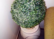 Al Riyadh - Used Natural and Artificial Plants for sale directly from the owner