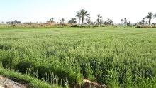 ارض زراعيه للبيع مساحتها 55 فدان قابلة للتجزئه حتى 5 فدان