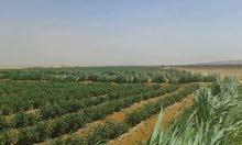 ارض للبيع طريق اسكندريه الصحراوي بعد الريست طريق اول العالمين