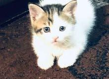 قطة اليفة عمرها 3 اسابيع