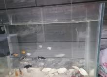 حوض مع الأسماك