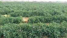 لعشاق الاستثمار الزراعي امتلك مزرعتك كاملة المرافق بالقرب من الكتله السكنيه