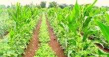 إحجز مزرعتك في منتجع زراعي في مصر