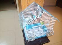 للبيع جوز عصافير